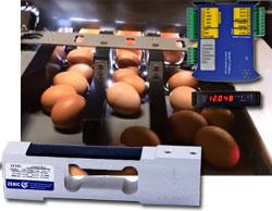 La máquina para pesar huevos usa una célula de carga y un transmisor de peso Zemic